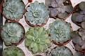 Garden Centre Cacti (7)