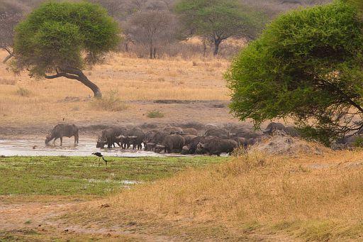 Tanzania 1 502.jpg