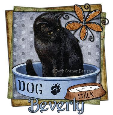 dcd-Beverly-Cat.jpg