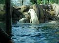 2007 Toledo Zoo 011