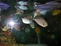 2007 Toledo Zoo 070