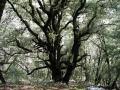 mossbigtree2