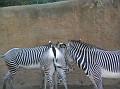 LA Zoo 070