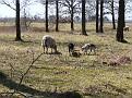 20130420 145606 Rondje Nederland
