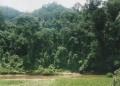 Borneo 031
