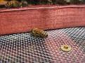 A Stray Honey Bee.