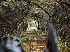 Tunnel ...durch Dornröschens Hecke?
